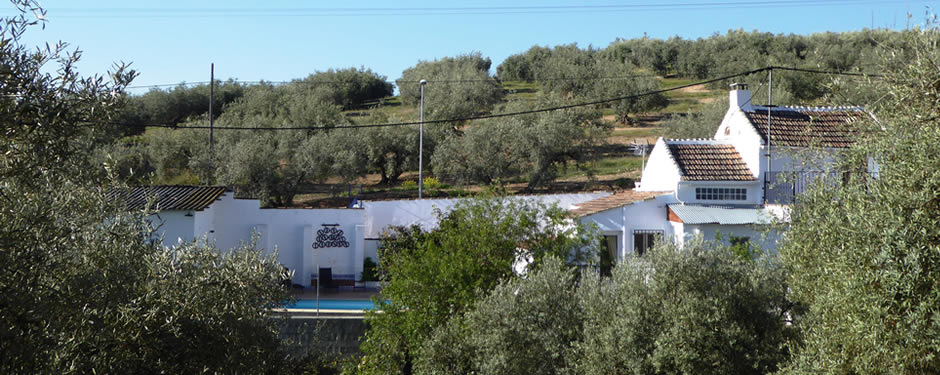 View of House from olive grove